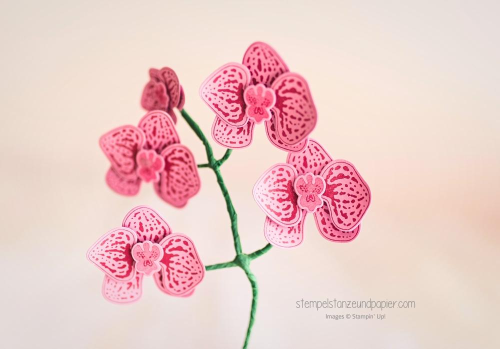 orchideenblüte stampin up orchideenzweig künstliche pflanze stempelstanzeundpapier