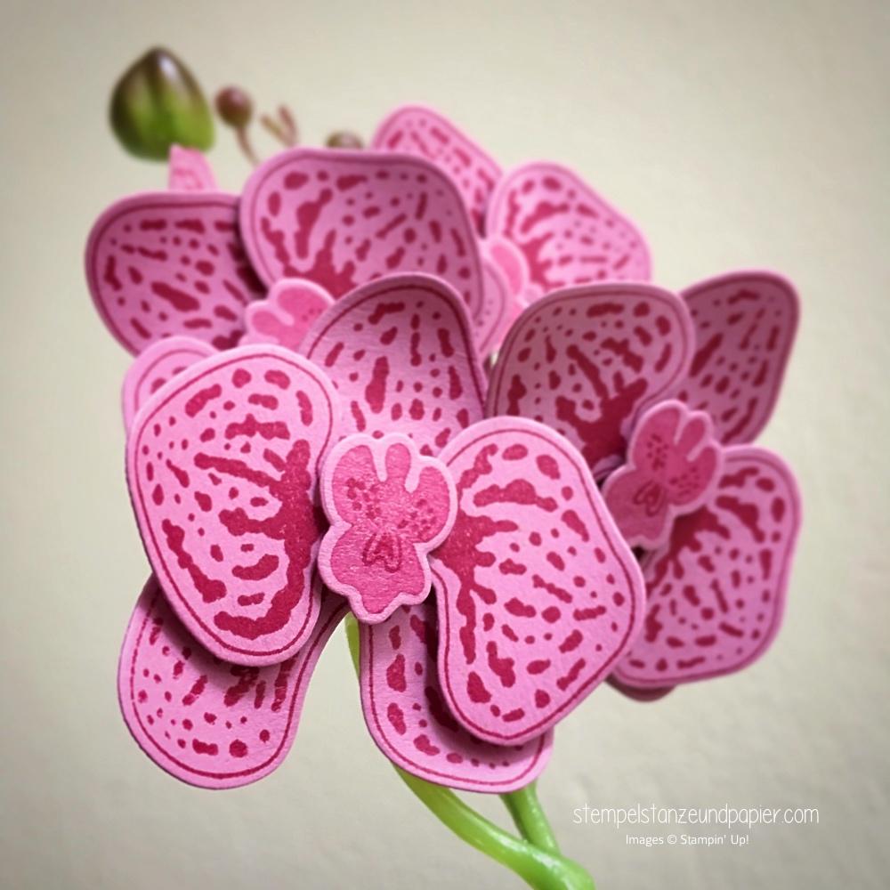 stempelset orchideenzweig framelits orchideenbluete stampin up stempelstanzeundpapier detail