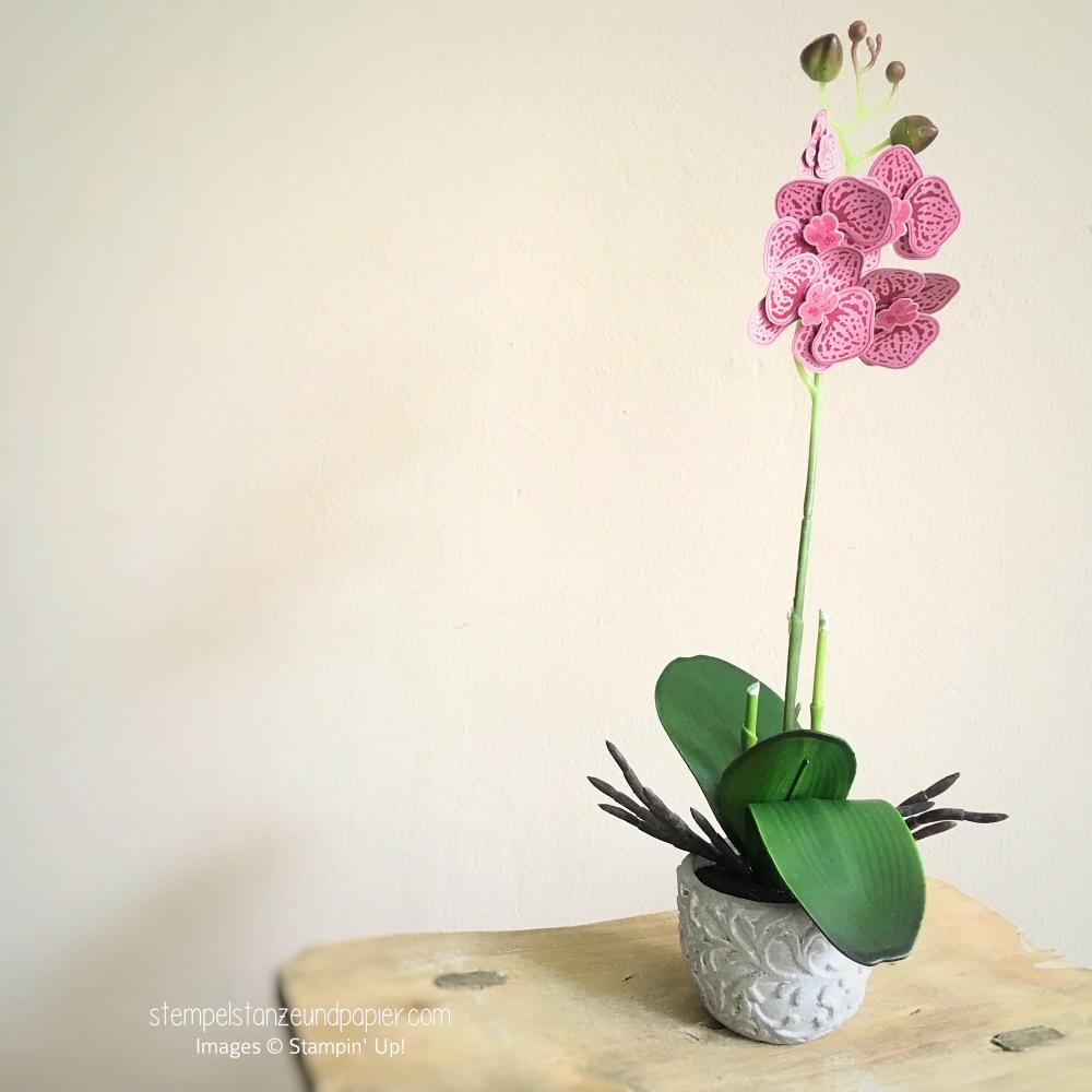 stempelset orchideenzweig framelits orchideenblueten pflanze aus papier kuenstliche pflanze orchidee stampin up stempelstanzeundpapier